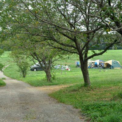 森のまきばオートキャンプ場 ドッグランの写真