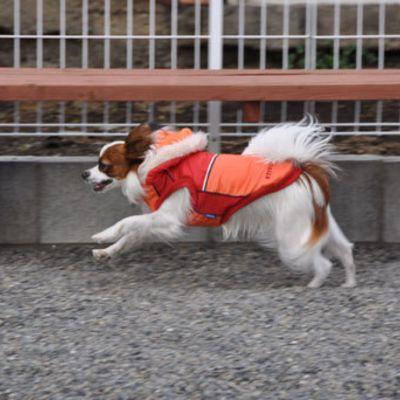 Dogrun Airy(エアリー)の写真