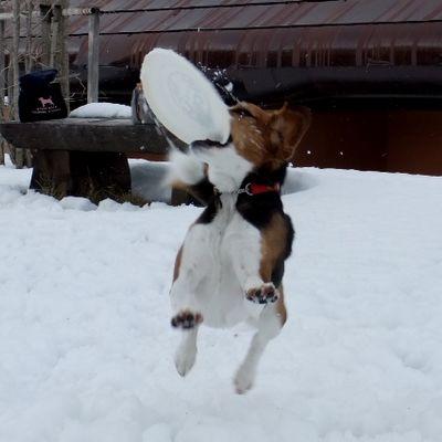 Dogresort Woof(ドッグリゾート ワフ) の写真