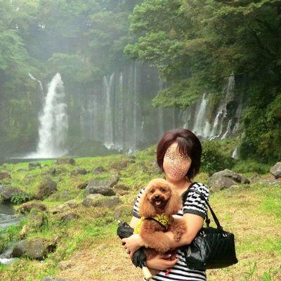 白糸の滝(静岡)の写真