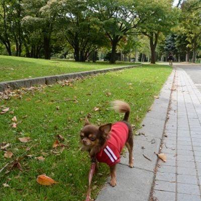 中島公園の写真