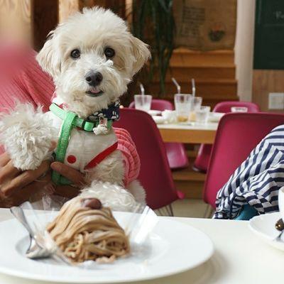 Dog Cafe & Garden L'allure (ドッグカフェ&ガーデン ラリュール)の写真