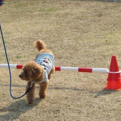 ぱるCafe&Dogrunの写真