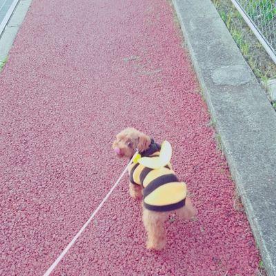 駒沢オリンピック公園総合運動場の写真