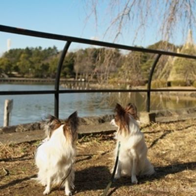 千葉公園の写真
