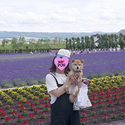ファーム富田の写真