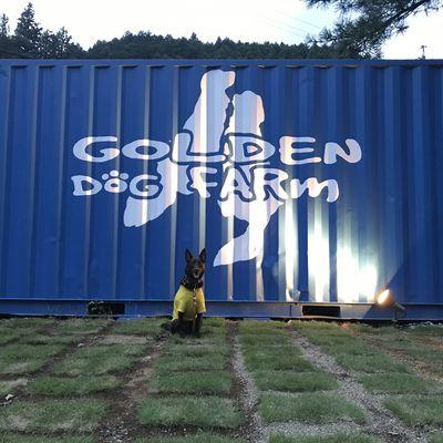 GORLDEN DOG FARm(ゴールデンドッグファーム)の写真