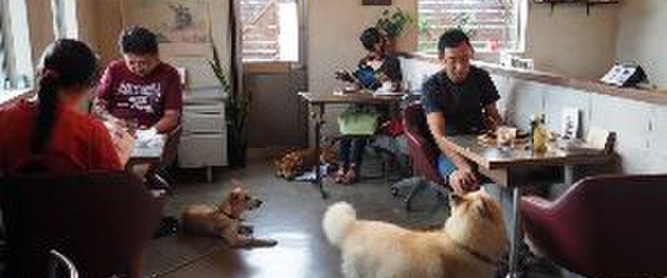 犬 カフェ 愛知