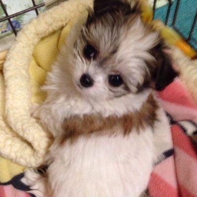 愛犬との運命的な出会いのイメージ