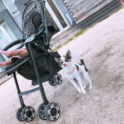 愛犬とのお出かけエピソードのイメージ