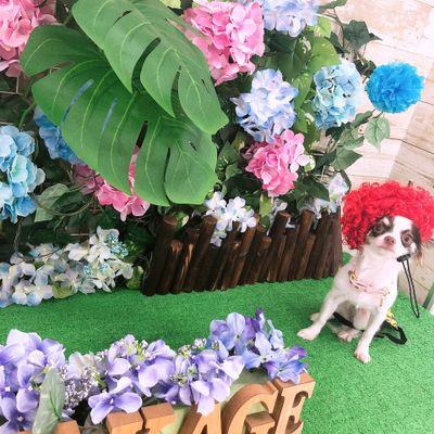 ドッグサロン花陰(HANAKAGE)の写真