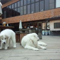 「犬連れの鉄板」の画像