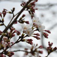 「オフ会でお花見がおすすめ」の画像