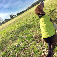 「広々とした芝生が良い!」の画像