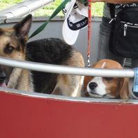「大型犬もリフトに乗れる優しいサービス♪」の画像