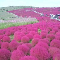 「季節ごとのお花を見るのが楽しみ」の画像