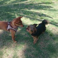 「犬と猫と行ける屋外水族館♪」の画像