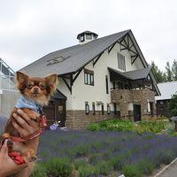 「犬と花を鑑賞できる」の画像