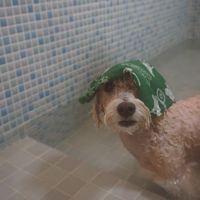「愛犬が満足できる場所」の画像