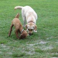 「のびのびと走り回れるドッグラン」の画像