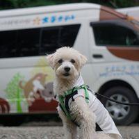 「犬とゆっくりできる温泉宿」の画像