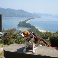「日本三景天橋立も愛犬と一緒に散策できるよ♪」の画像