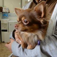 「お土産を買う時に愛犬を預けるのに便利」の画像