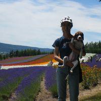 「北海道の大地を彩るお花畑♪」の画像