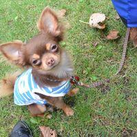 「札幌から近く犬も利用できるキャンプ場」の画像