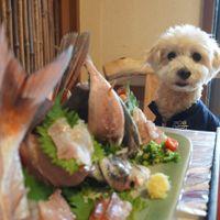 「絶品金目鯛!犬店内OKで優しいお店」の画像