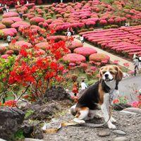 「ツツジが美しい散歩に最適の山」の画像
