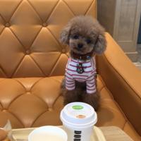 「愛犬と食べれる」の画像