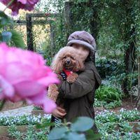 「花の季節ではなかったが、ちゃんとバラが咲いていた。」の画像