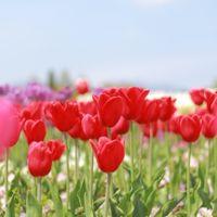 「愛犬と四季の花が楽しめます。」の画像