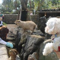 「愛犬と一緒にカピバラに会える!シャボテンも見れる!楽しいスポット。」の画像
