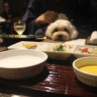 「素晴らしい宿!愛犬と一緒に極上の時間を過ごせます。」の画像