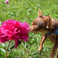 「十勝で花をめでる」の画像