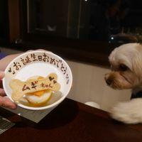 「フリードリンク!愛犬も人間も大満足な素敵なホテル。」の画像